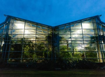 Snap Pea Underground <br> at the Butterfly House
